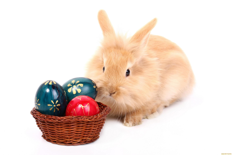 Картинки заяц в яйце